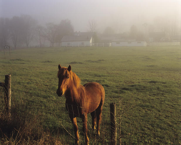 Horse and farm in Shenandoah Valley VA