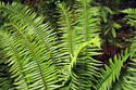 img -8 Ferns in the rain forest